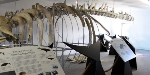 Right Whale Exhibit Museum